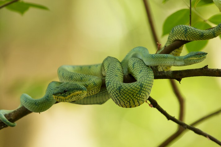 reptiles9