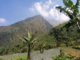 Pohon Pisang dan Bukit