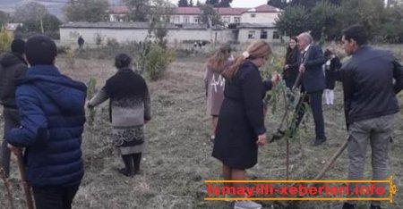 Ağacəkmə aksiyası keçirilib