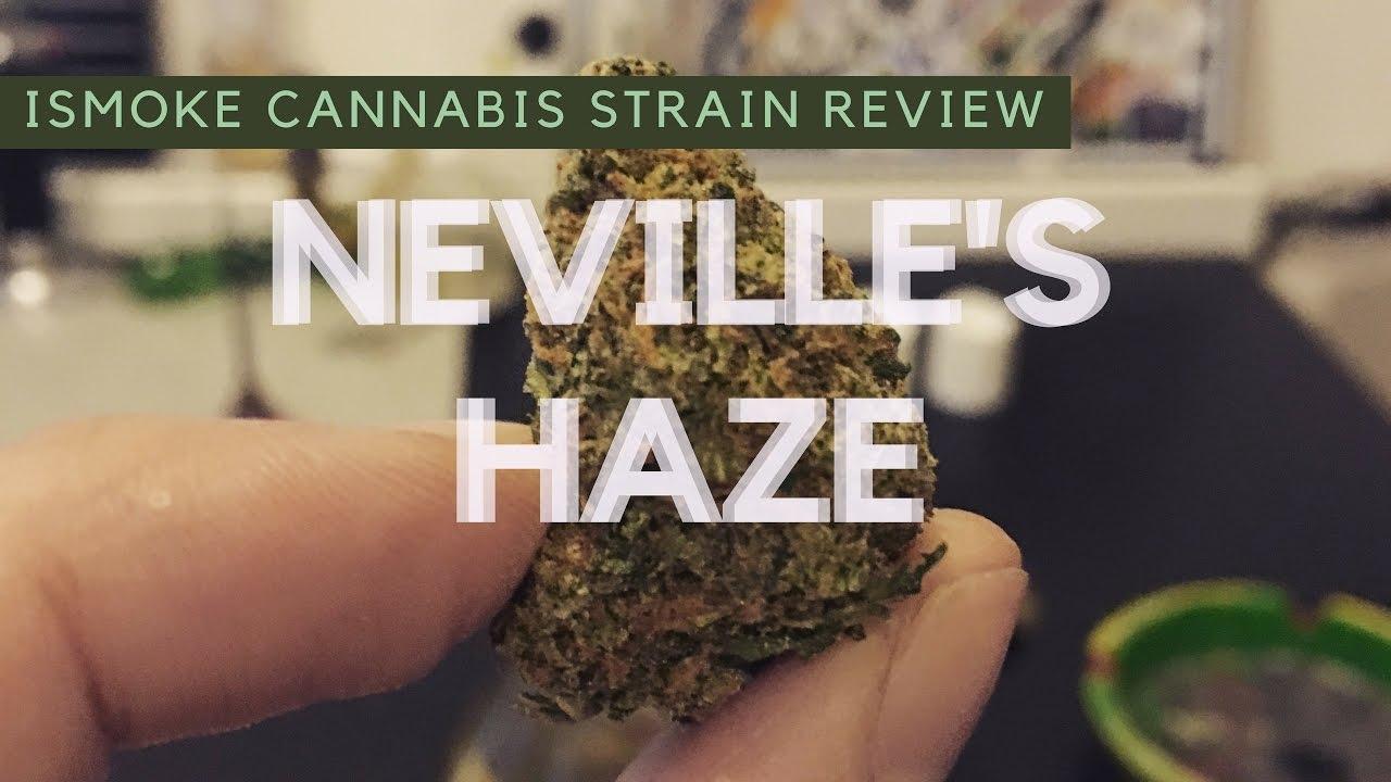 Neville's Haze Cannabis Strain Review