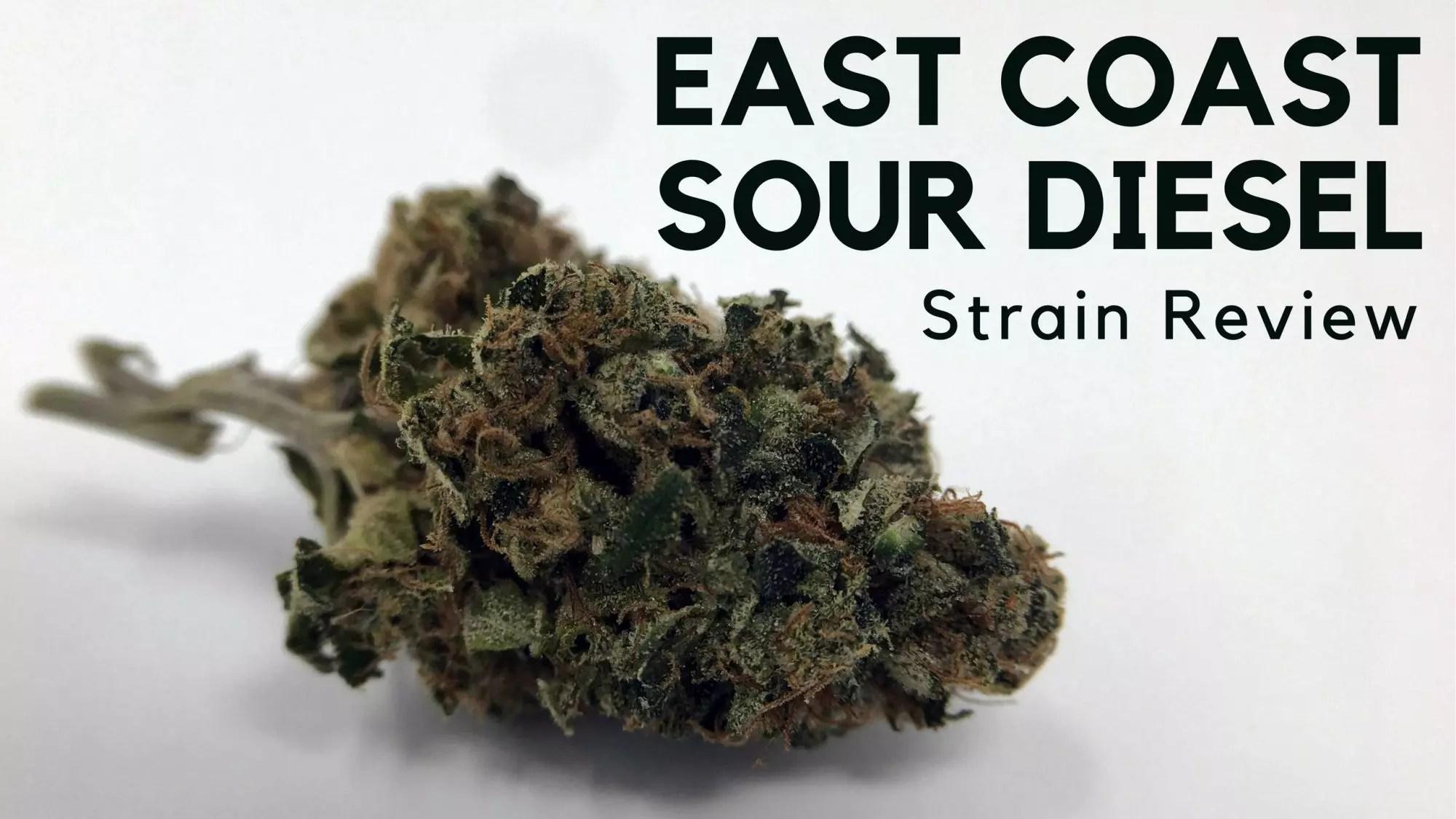 East Coast Diesel >> East Coast Sour Diesel Cannabis Strain Information Review Ismoke
