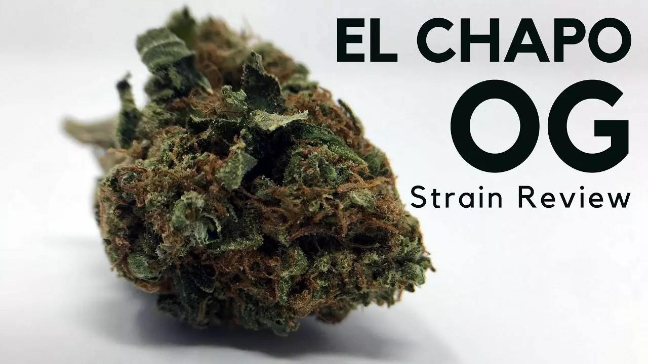 El Chapo OG Cannabis Strain Information