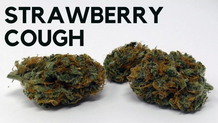Strawberry Cough Strain Review