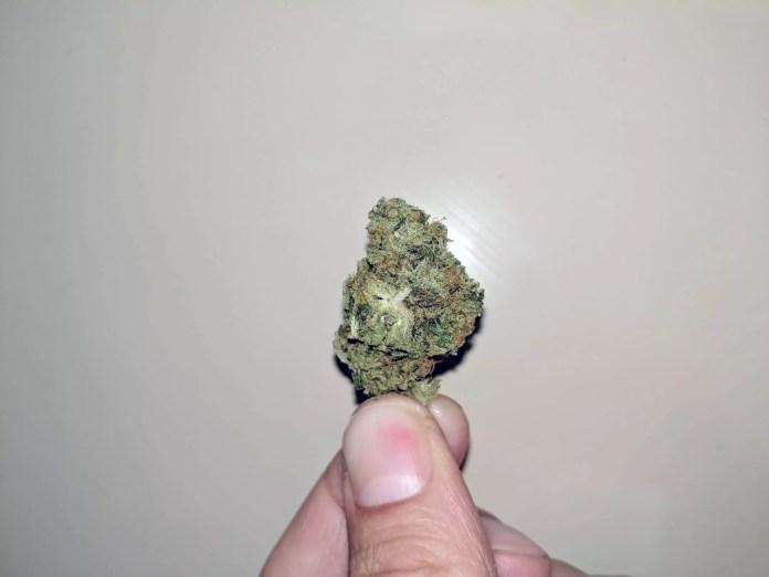 lemon haze cbd, Lemon Haze CBD Strain Review