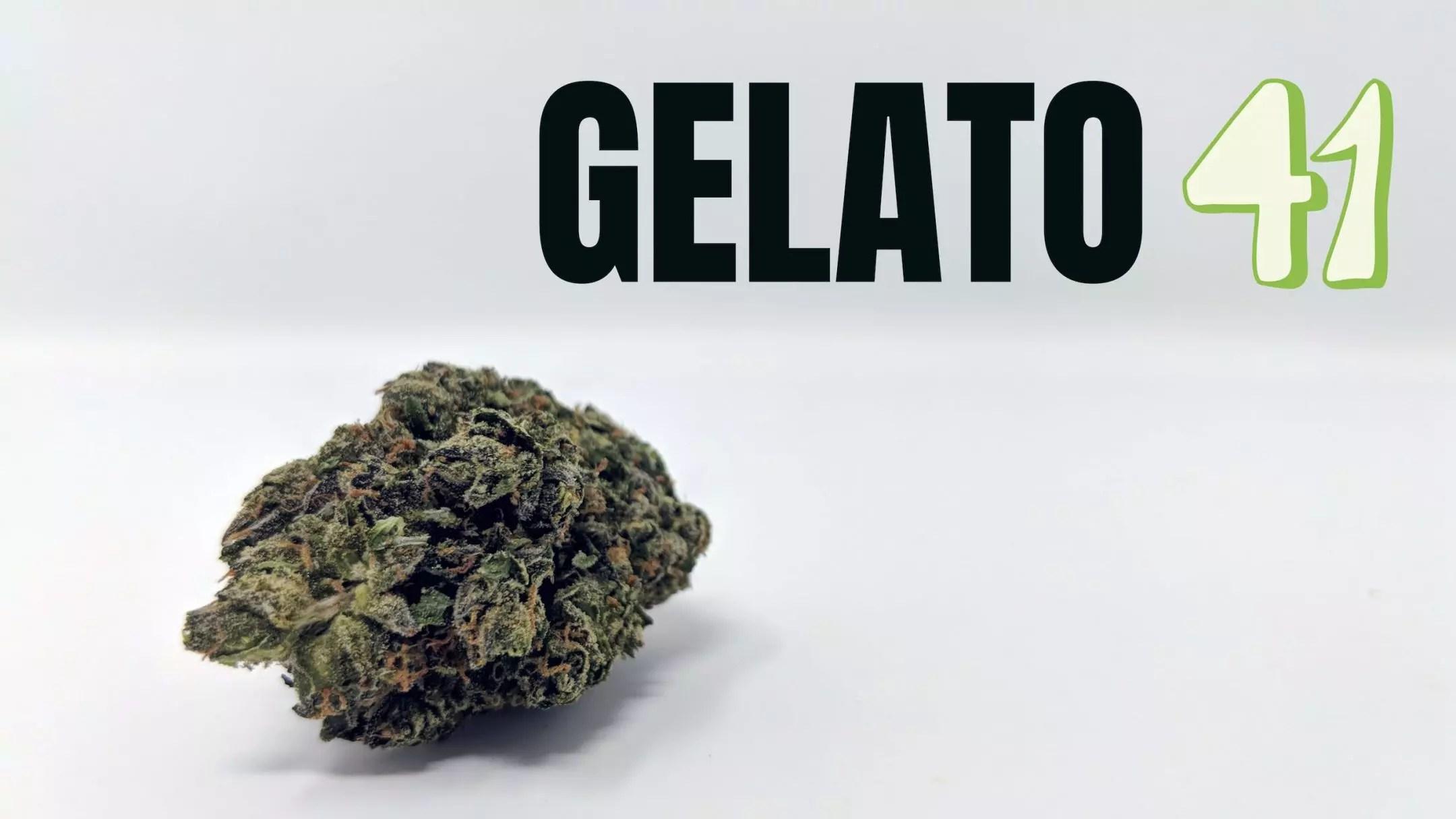Gelato 41 Cannabis Strain Review & Information - ISMOKE