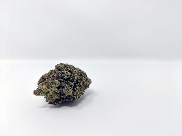 , Gelato 41 Cannabis Strain Review & Information