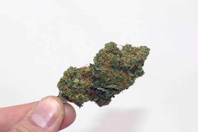 CaliPo, CaliPo Cannabis Strain Review & Information