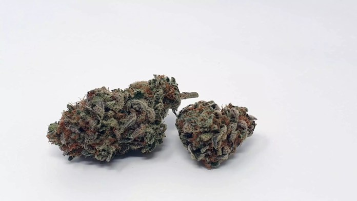 , Cherry Cola by Dank Hunters Seeds Cannabis Strain Review & Information