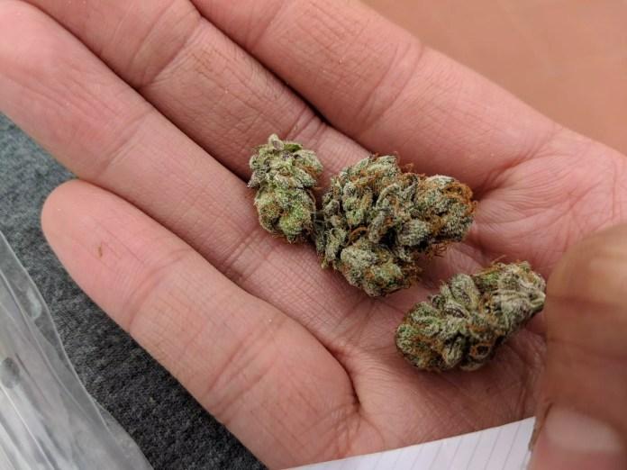 Green Gelato, Green Gelato Cannabis Strain Review & Information