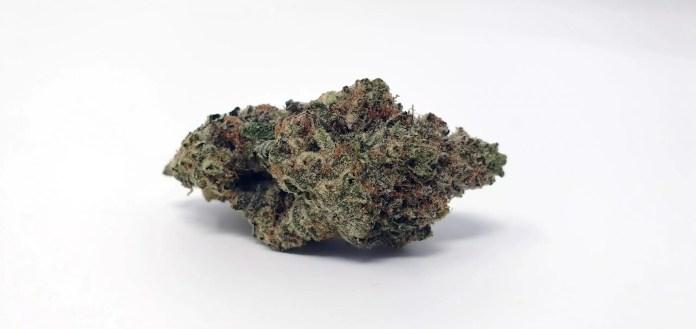 Ginger Glue, Ginger Glue by Black Sheep Botanicals Cannabis Strain Review & Information
