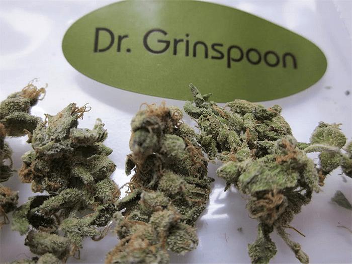 Dr. Lester Grinspoon, Dr Lester Grinspoon 1928-2020
