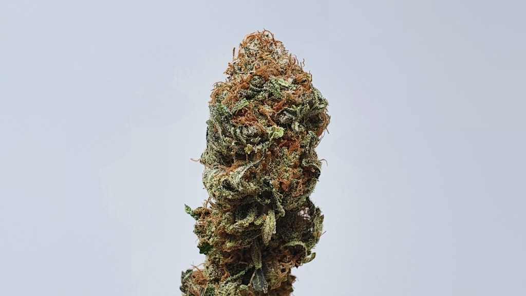 Disco Biscuit, Disco Biscuit Cannabis Strain Information and Review, ISMOKE