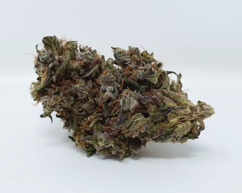 Kurokush Strain Review