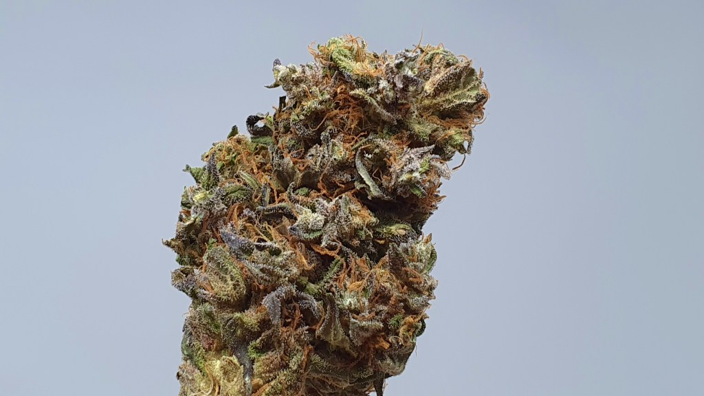 , Kurokush Cannabis Strain Review & Information