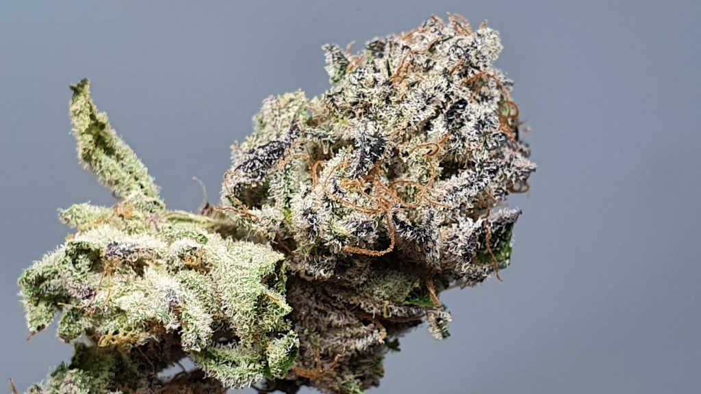 , Lemon Lime Pie Cannabis Strain Review & Information, ISMOKE