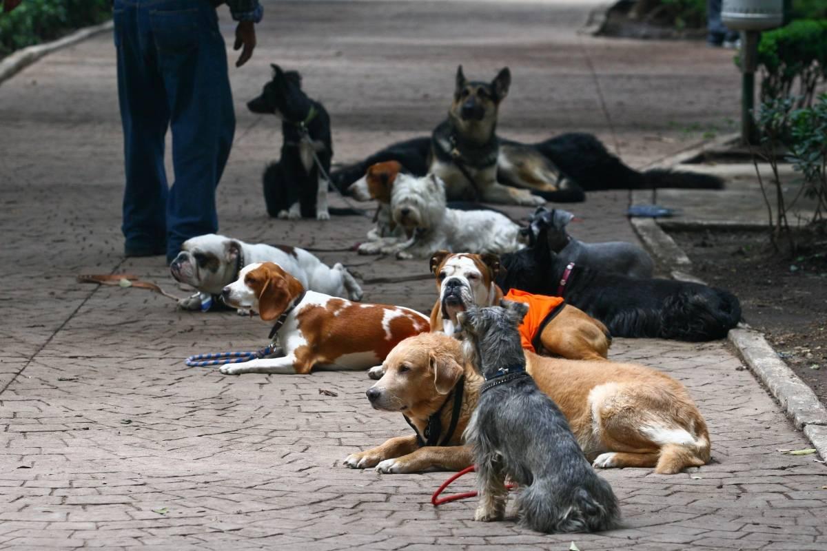 México: Hasta cuatro años de cárcel para quienes abandonen sus mascotas
