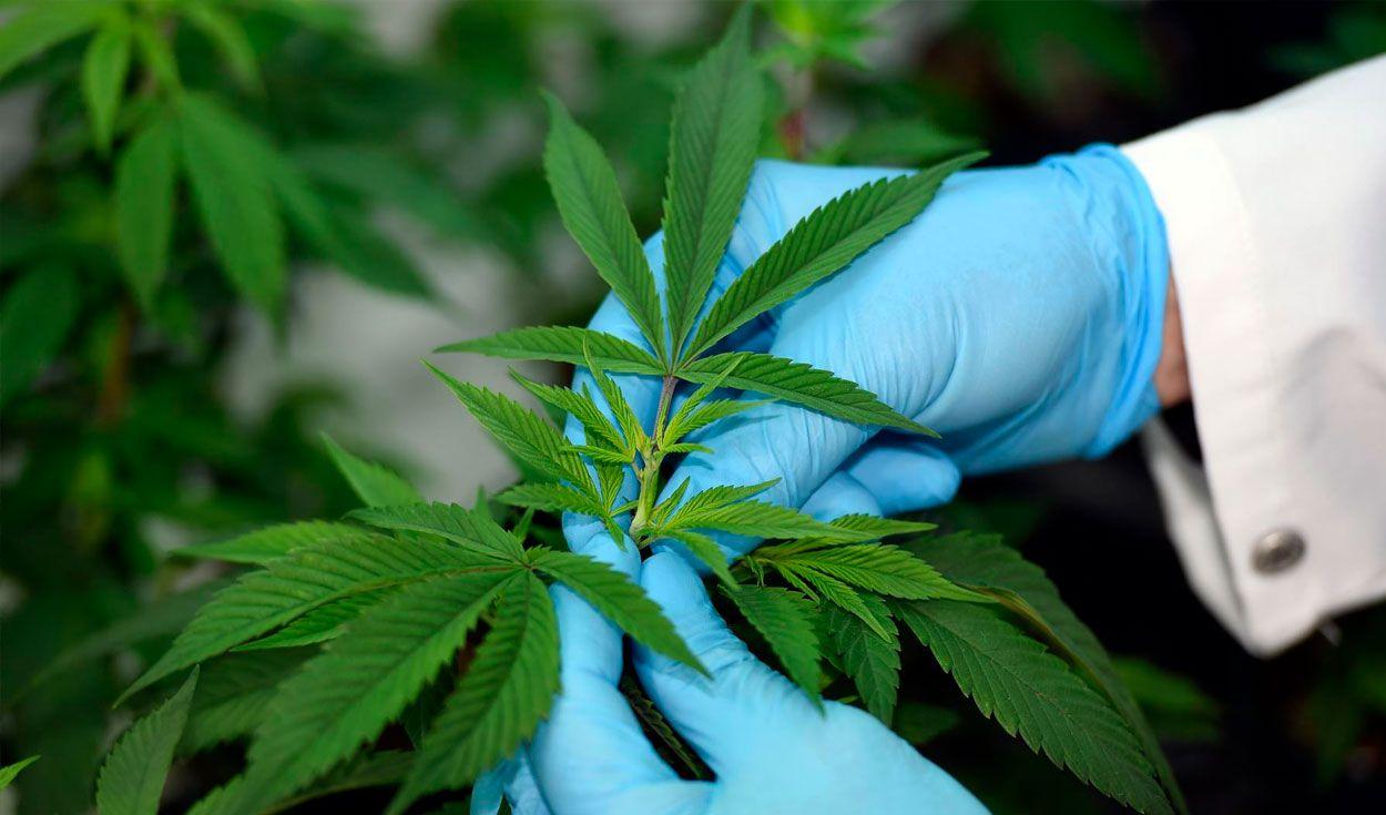 La ONU eliminó al cannabis de la lista de las drogas más peligrosas del mundo