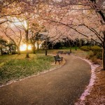 35 Beautiful Photos Of Cherry Blossoms Around The World 500px