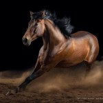 Everything You Need To Know About Horse Photography 500px