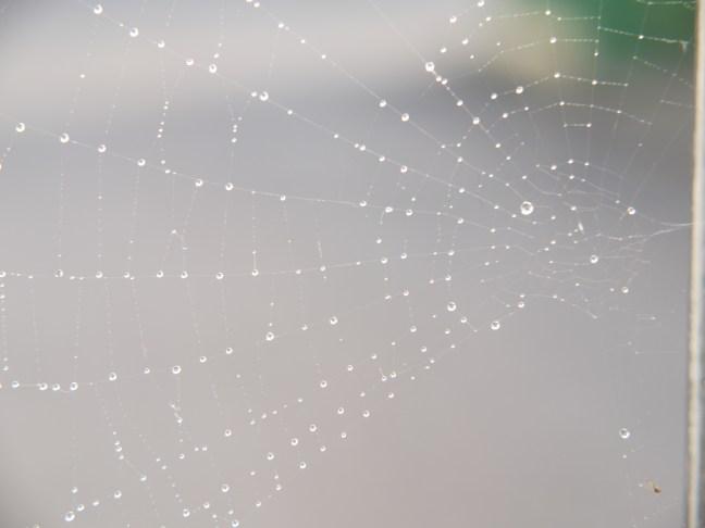 Radiating Spider Web