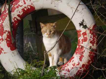 ginger feral and lifebuoy