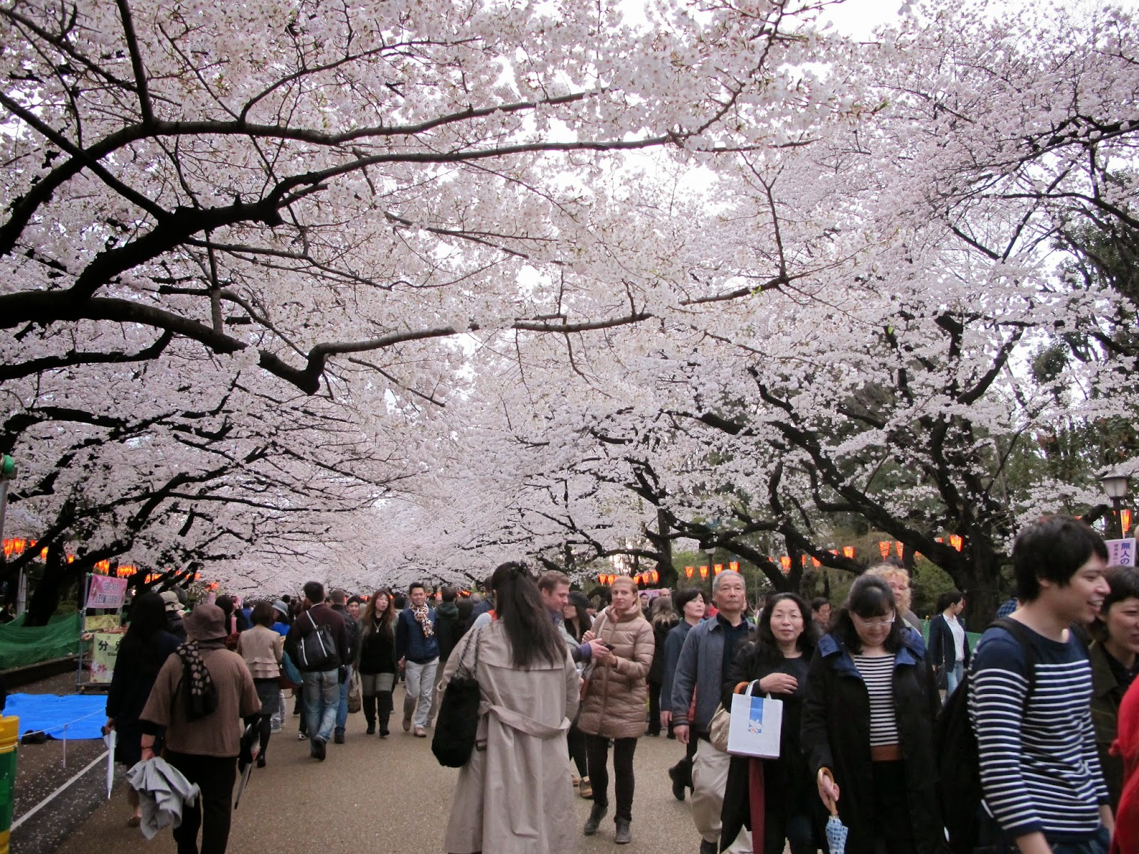 Image result for ueno hanami