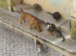 hypatia poor cats