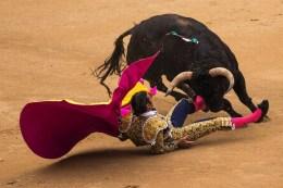 the bullfighter