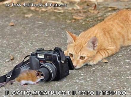 Gato y el ratón