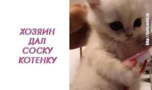 Посмотрите, что сделал этот котенок, когда хозяин попытался его обидеть!