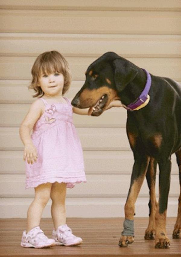3-3 | Девочка играла с доберманом, вдруг пес оскалился и зарычал...