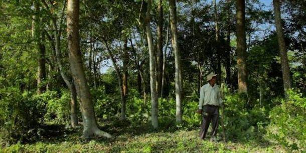 5_result-11   Когда он посадил бамбук в пустыне, его посчитали сумасшедшим! Через 37 лет его имя знали все...