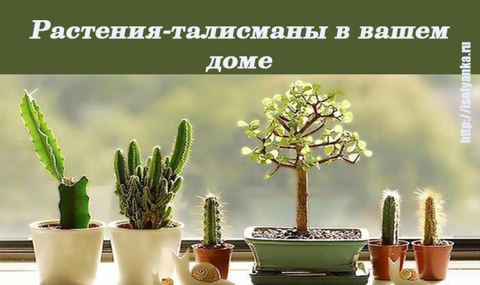 talismany | Узнайте какое растение может стать вашим талисманом, притягивающим удачу и богатство!