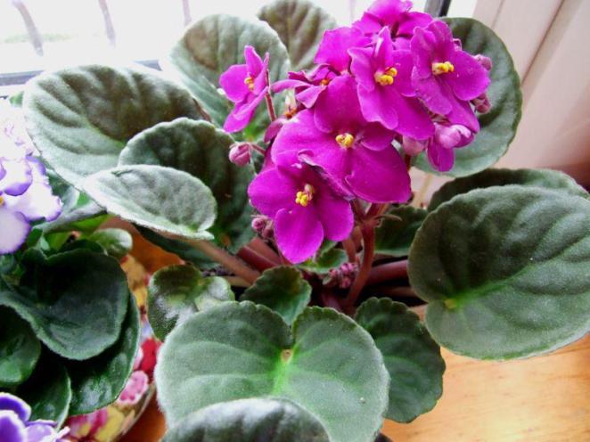 image9-15 | Известный экстрасенс поведала какие цветы приносят удачу и счастье в дом!