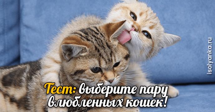 Хотите узнать о себе кое-что интересное? Тогда быстрее выбирайте пару влюбленных кошек!