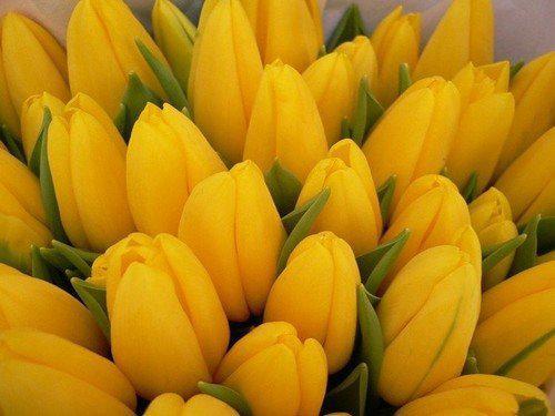 image2-135 | Какой цвет приносит удачу в зависимости от знака Зодиака!