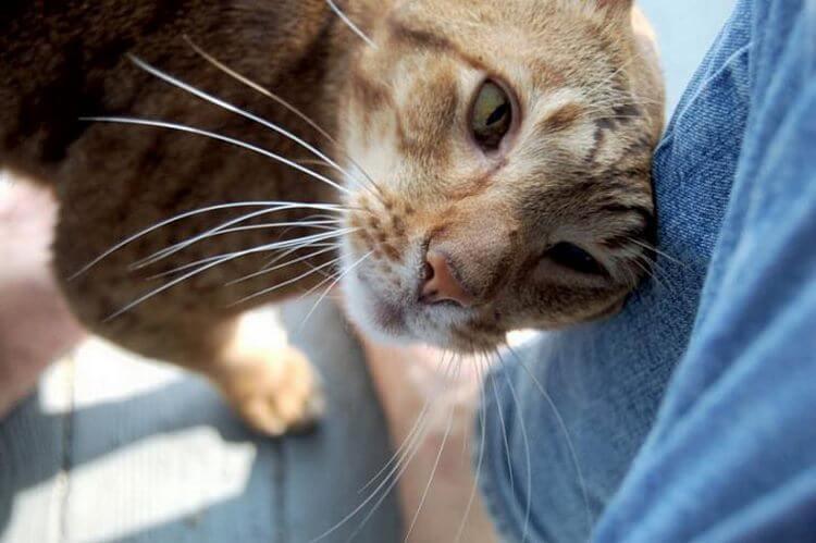 image8-53   Как кошки выражают свою любовь к людям: 10 оригинальных способов