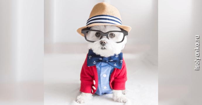 Самый стильный пёс: он покорил сердца пользователей Инстаграм!