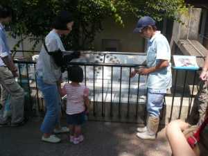 市川市動植物園のカワウソを餌でおびき寄せる