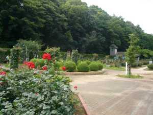 市川市動植物園の美しい植物