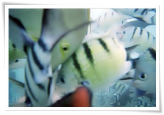 魚群のシーウォーカー