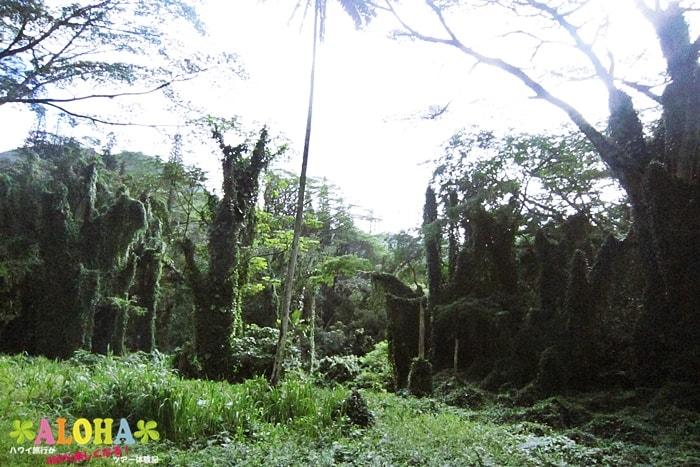 ハイキング中の景色2