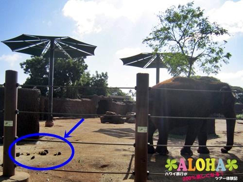 ホノルル動物園内14アジアゾウ画像2