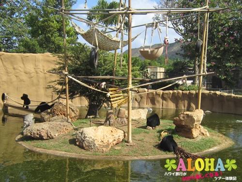 ホノルル動物園内8フクロテナガザル画像