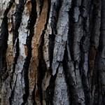 Tree Bark Texture Free Stock Photo Iso Republic