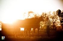 rosebud-horse-ranch-indiana13