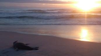 Sonnenuntergang Noordhoek Beach