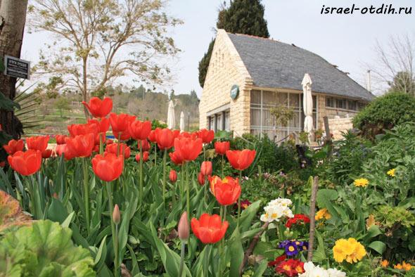 Ботанический сад в Иерусалиме фото