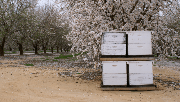 Using BeeConnect can help beekeepers detect any changes in normal hive growth. Photo by www.shutterstock.com