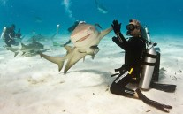 hi5 with a shark